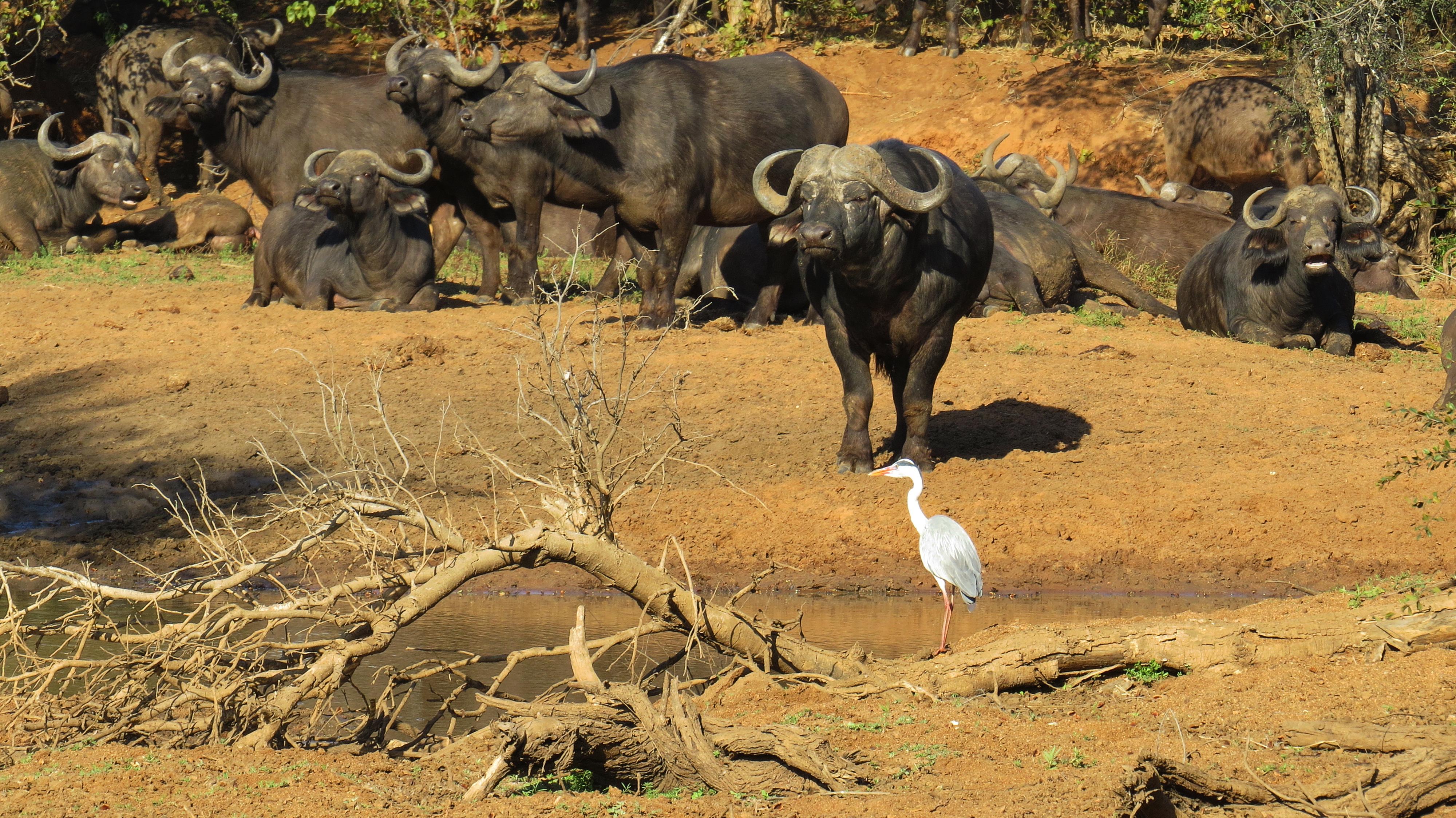 birding in kruger national park 171 birding and wildlife safaris