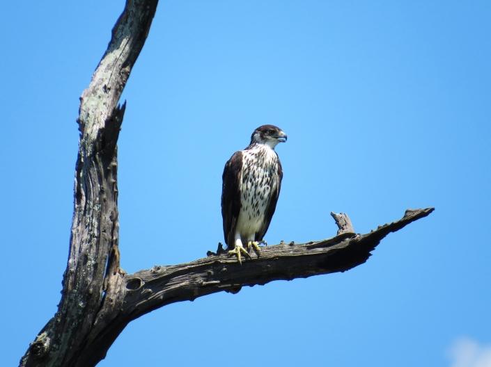 Kruger National Park « BIRDING LIMPOPO
